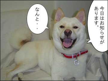 愛犬チャンプ-1コマ