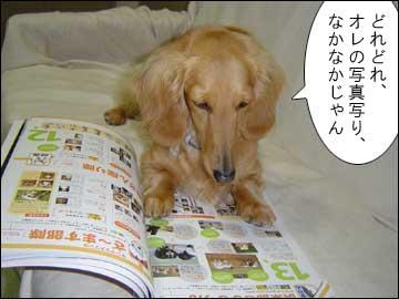 愛犬チャンプ-3コマ