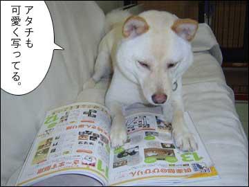 愛犬チャンプ-4コマ