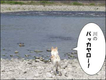 長良川-4コマ