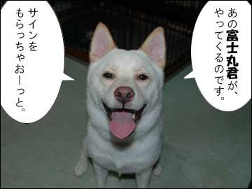 予告:DogFesta に行きます-2コマ