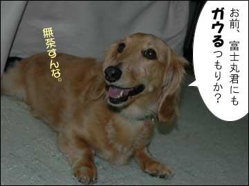 予告:DogFesta に行きます-3コマ