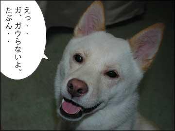 予告:DogFesta に行きます-4コマ