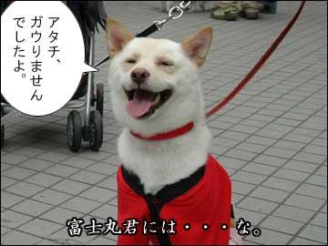 DogFesta に行きました(その1)-6コマ