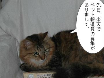 ペット報道員-2コマ