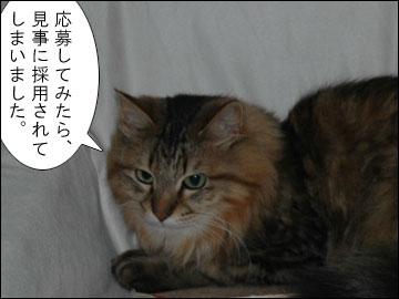 ペット報道員-3コマ