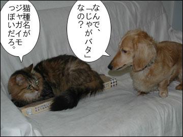 ペット報道員-5コマ
