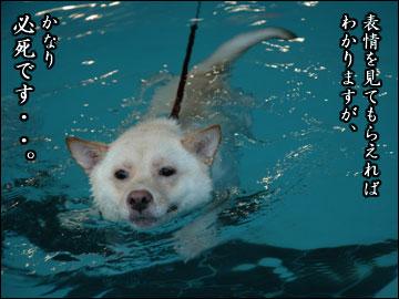 プールで水泳-7コマ