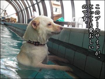 プールで水泳-9コマ
