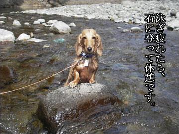 夏休みの思ひ出(とろろ偏)-4コマ