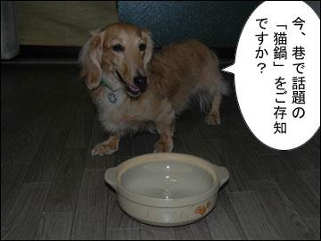 猫鍋・犬鍋-1コマ