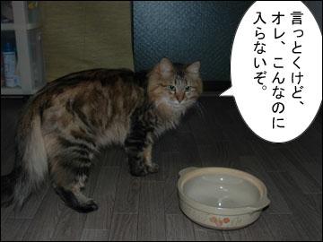 猫鍋・犬鍋-2コマ
