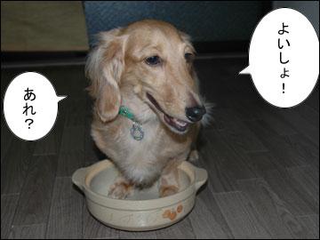 猫鍋・犬鍋-4コマ