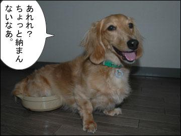 猫鍋・犬鍋-5コマ