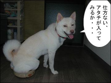 猫鍋・犬鍋-7コマ