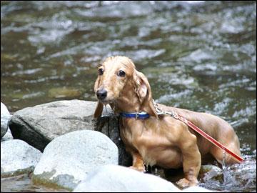 川遊びの写真-9コマ