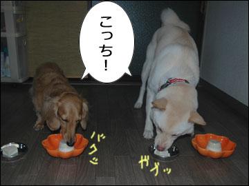 美味しい豆腐-4コマ