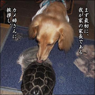 交換留学の様子(鉄君編)-1コマ