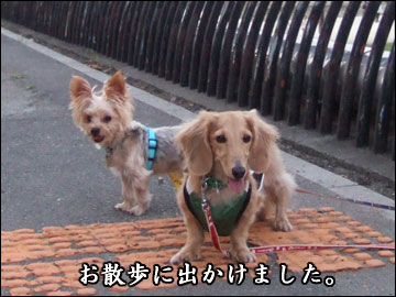 交換留学の様子(とろろ編)-3コマ