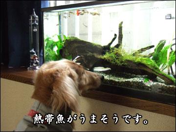 交換留学の様子(とろろ編)-10コマ