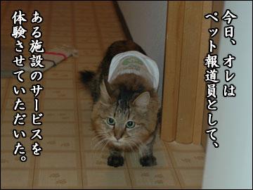 ネコ専用ホテルを取材-1コマ