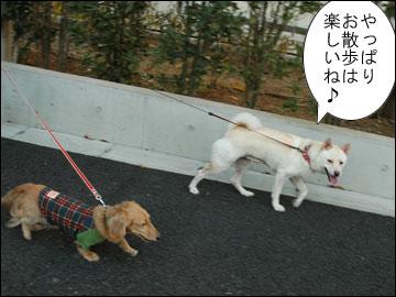 久しぶりの散歩-5コマ