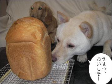 パンを焼いてみました-6コマ