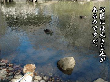 公園の池-2コマ