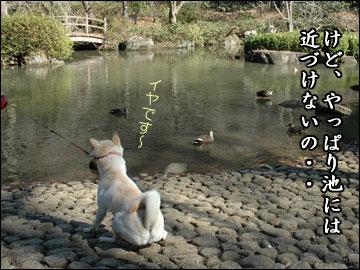 公園の池-10コマ