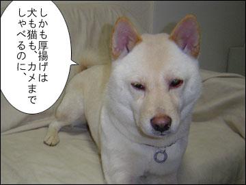 元祖おしゃべり犬-4コマ