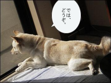 日向ぼっこで昼寝-3コマ