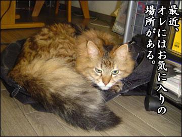 ネコ兄さんの座布団-1コマ