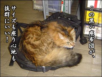 ネコ兄さんの座布団-2コマ