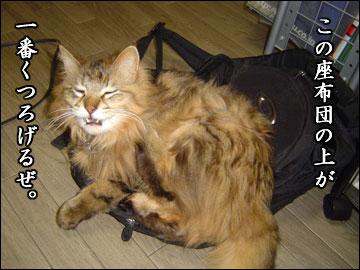 ネコ兄さんの座布団-3コマ