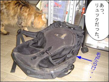 ネコ兄さんの座布団-5コマ
