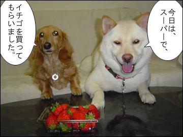 イチゴ再来-2コマ