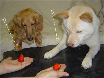 イチゴ再来-4コマ