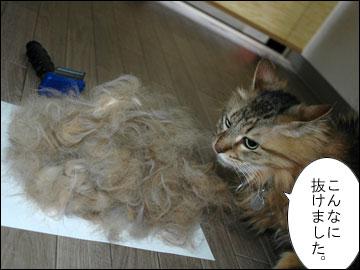 抜け毛の季節-5コマ