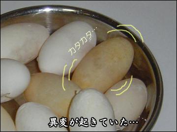 卵、かえる?-2コマ