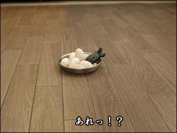卵、かえる?-3コマ