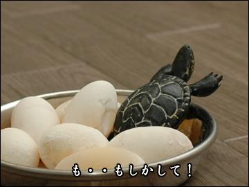 卵、かえる?-5コマ