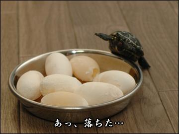 卵、かえる?-6コマ