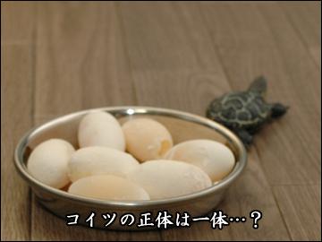 卵、かえる?-7コマ