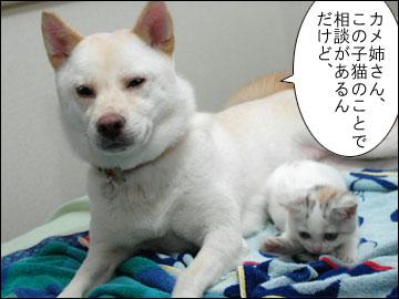 カメ姉さんと子猫-1コマ
