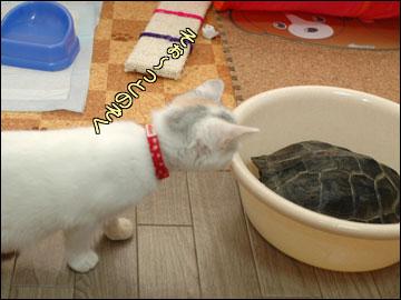 カメ姉さんと子猫-5コマ