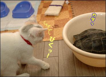 カメ姉さんと子猫-7コマ