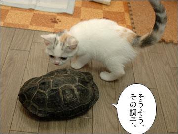 カメ姉さんと子猫-9コマ