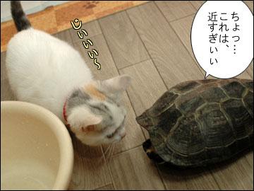 カメ姉さんと子猫-10コマ