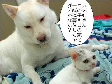 子猫ちゃんの行く末-1コマ