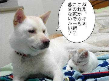 子猫ちゃんの行く末-4コマ